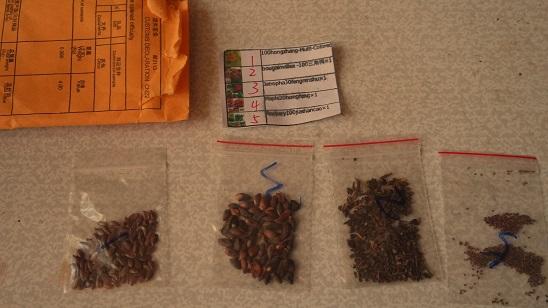 Антуриум выращивание из семян когда сажать 13