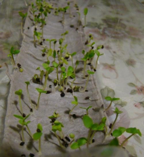 как выглядит росток орхидеи фото