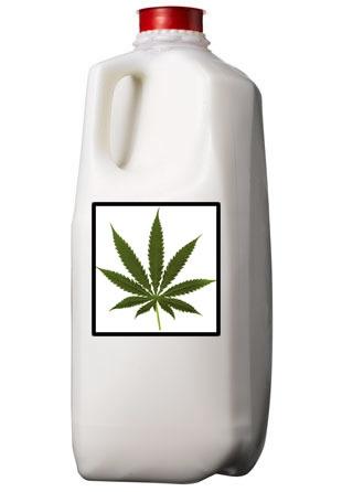 Как сделать молочко из конопли
