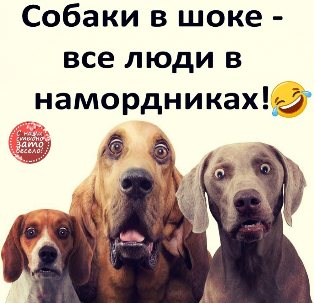Анекдот Про Собаку И Мед